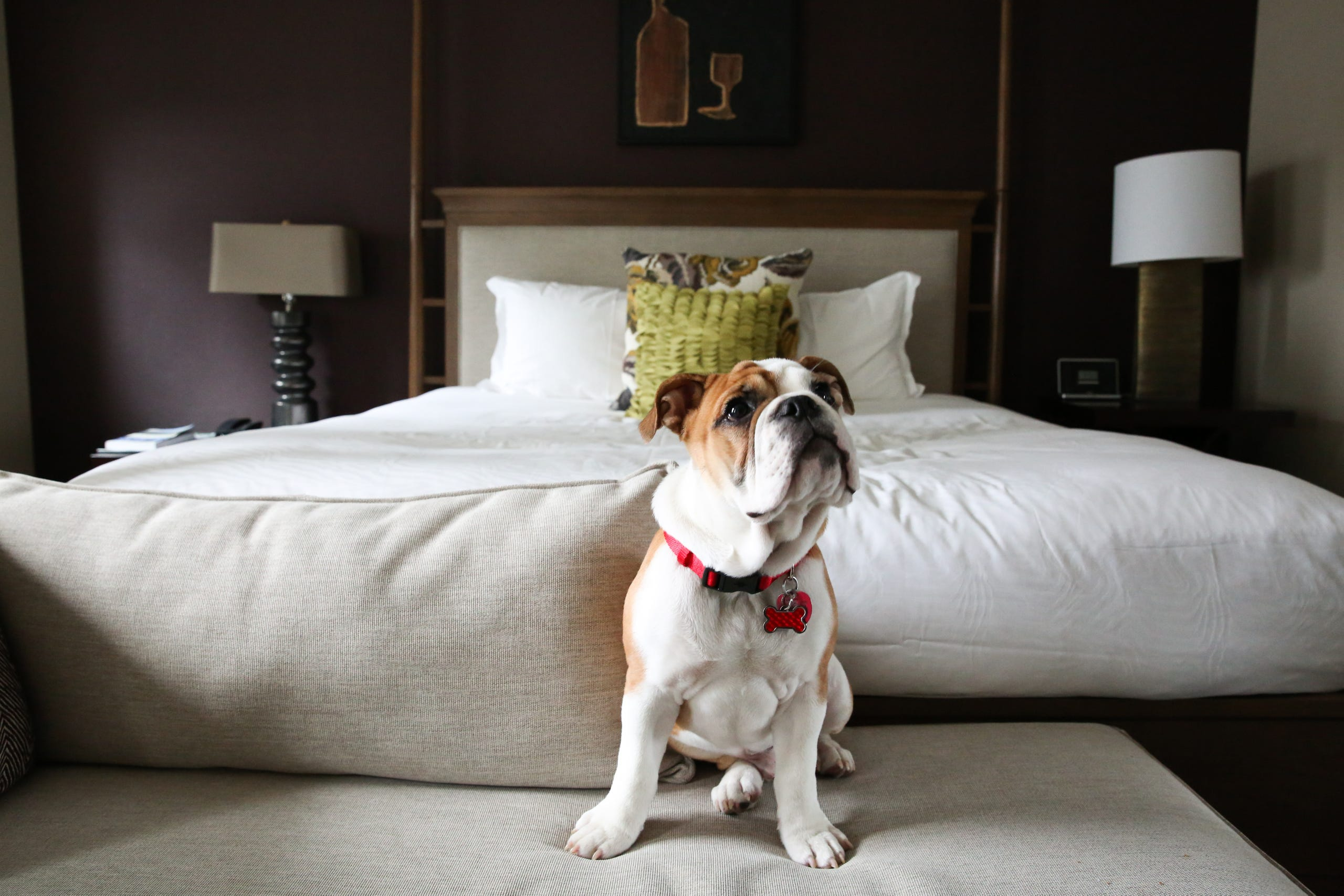 Want to Bring Your Dog to a Hotel, dog friendly hotel